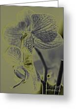 New Photographic Art Print For Sale Orchids 11 Greeting Card