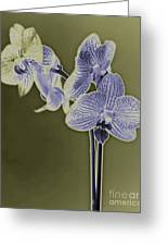New Photographic Art Print For Sale Orchids 9 Greeting Card