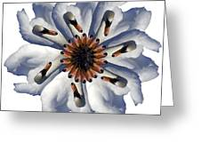 New Photographic Art Print For Sale Pop Art Swan Flower On White Greeting Card