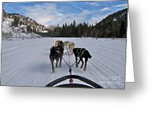 Riding Through The Colorado Snow On A Husky Pulled Sled Greeting Card