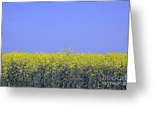 New Photographic Art Print For Sale Yellow English Fields 2 Greeting Card