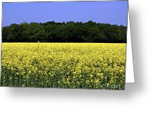 New Photographic Art Print For Sale Yellow English Fields Greeting Card