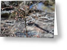 New Spring Buds Greeting Card