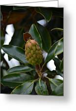 New Start Magnolia Greeting Card