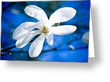 New White Magnolia Blossom Close Up Greeting Card by Raimond Klavins