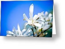 New White Magnolia Blossom Greeting Card