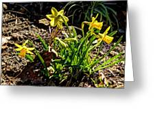 New Yellow Flowers 1 Greeting Card