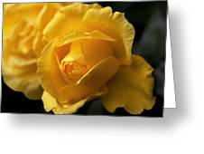 New Yellow Rose Greeting Card