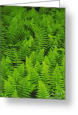 New York Ferns Greeting Card
