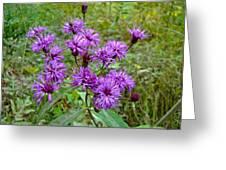 New York Ironweed Wildflower - Vernonia Noveboracensis Greeting Card
