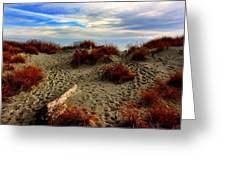 New Zealand Beach Greeting Card