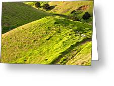 New Zealand Farmland Greeting Card