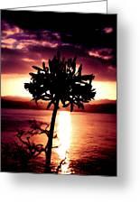 New Zealand Flower Sunset Greeting Card