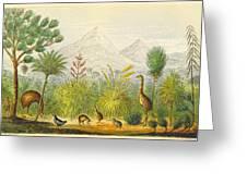 New Zealand Kiwi, Takahe, Extinct Moa Greeting Card