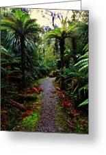 New Zealand Rainforest Greeting Card