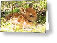 Newborn Fawn Greeting Card