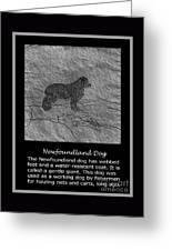 Newfoundland Dog Vintage Sketch Greeting Card