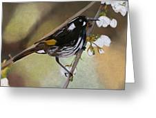 Newholland Honey Eater Greeting Card
