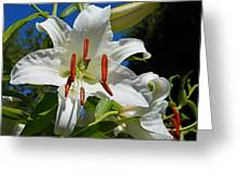 Newly Opened Lily Greeting Card