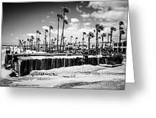 Newport Beach Dory Fishing Fleet Black And White Picture Greeting Card by Paul Velgos