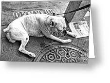 Newsworthy Dog In French Quarter Black And White Greeting Card