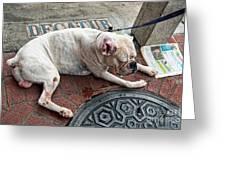 Newsworthy Dog In French Quarter Greeting Card