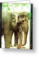 Niabi Asian Elephants Greeting Card