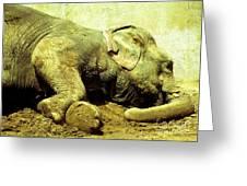 Niabi_asian Elephant Greeting Card
