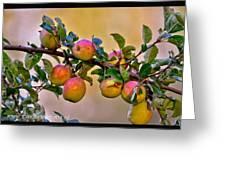 Nice Apples  Greeting Card