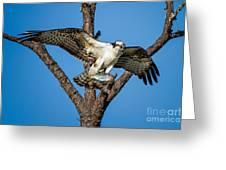 Nice Catch Greeting Card