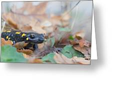 Nice Fire Salamander Greeting Card
