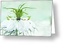 Nigella Damascena 'double White'  Greeting Card