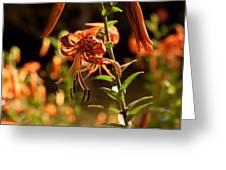 Night Bloom II Greeting Card