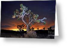 Night Bloom Greeting Card