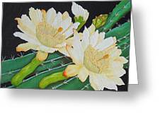 Night Blooming Cacti Greeting Card