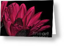 Night Blooming Lily 1 Of 2 Greeting Card