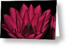 Night Blooming Lily 2 Of 2 Greeting Card