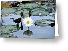 #night Blooming Water Lily Greeting Card
