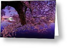 Night Blossoms Greeting Card by Metro DC Photography