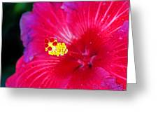 Night Fire Hibiscus Greeting Card