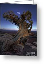 Night Guardian Of The Valley Greeting Card