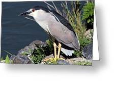 Night Heron Bird Greeting Card by Diane Rada