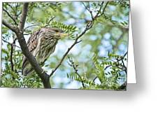 Night Heron Pictures 10 Greeting Card