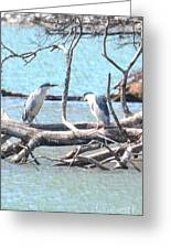 Night Herons Greeting Card