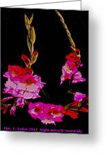 Night Miracle-sword Lily Greeting Card