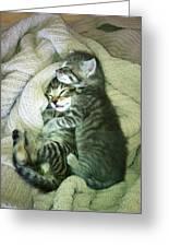 Night Night Kitties Greeting Card