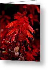 Night Of Glistening Red Salvia Greeting Card