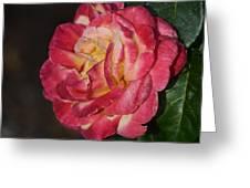 Night Rose Greeting Card