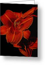 Night Time Lilly Greeting Card