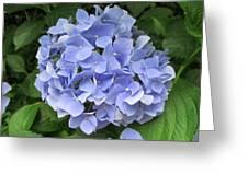 Nikko Blue Hydrangea Greeting Card